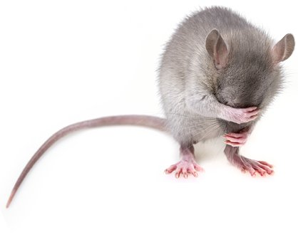 mouse-3194768__340